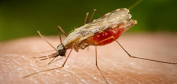 image_typepest-aedes